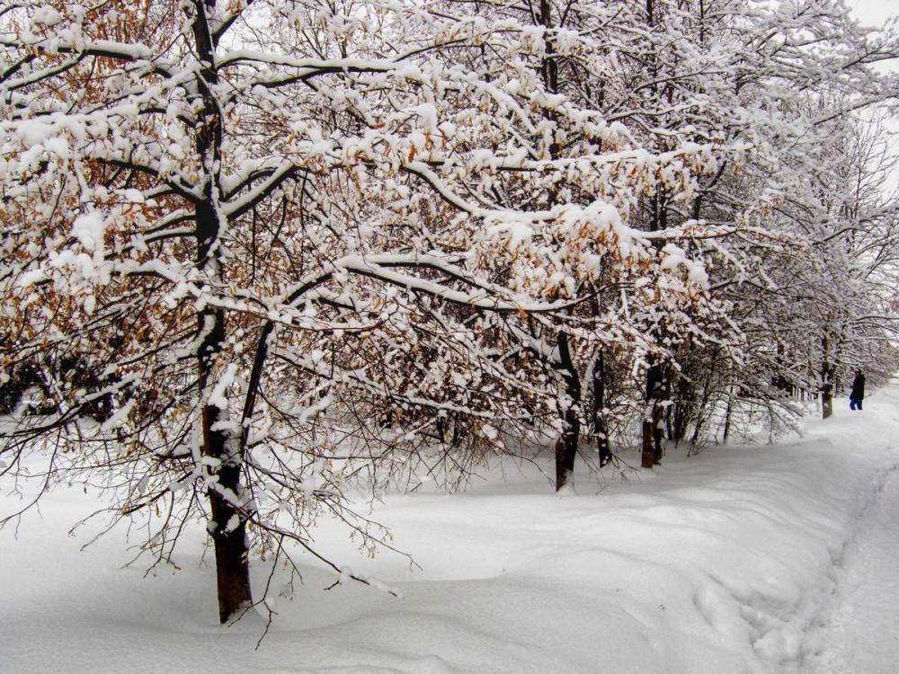 К Камышину подходит теплый снежный фронт