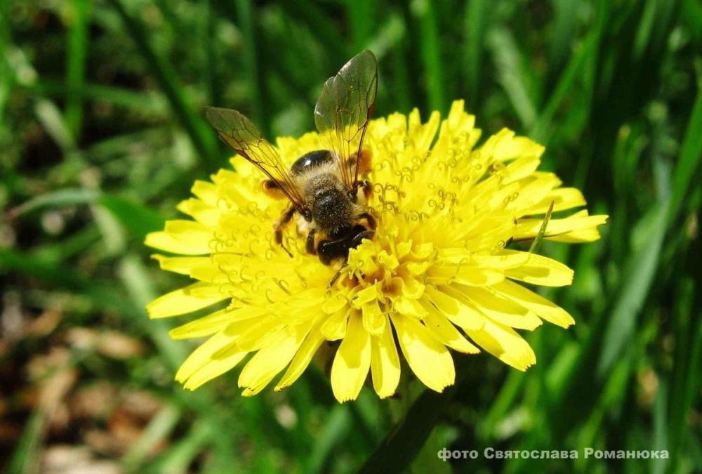 Среди райской природы упал и умер пчеловод