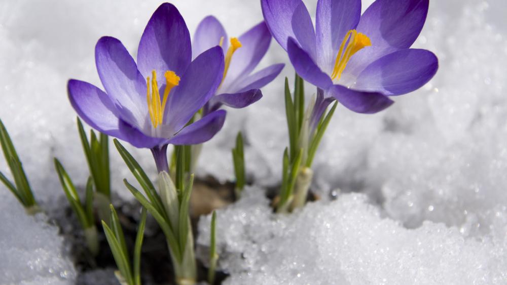 Сегодня днем в Камышине около нуля, в ночь на 15 марта - 10 градусов мороза