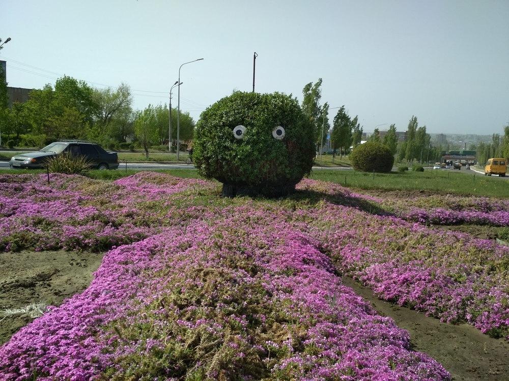 Флористическая улыбка Камышина: розовый «осьминог» все толще и добрее