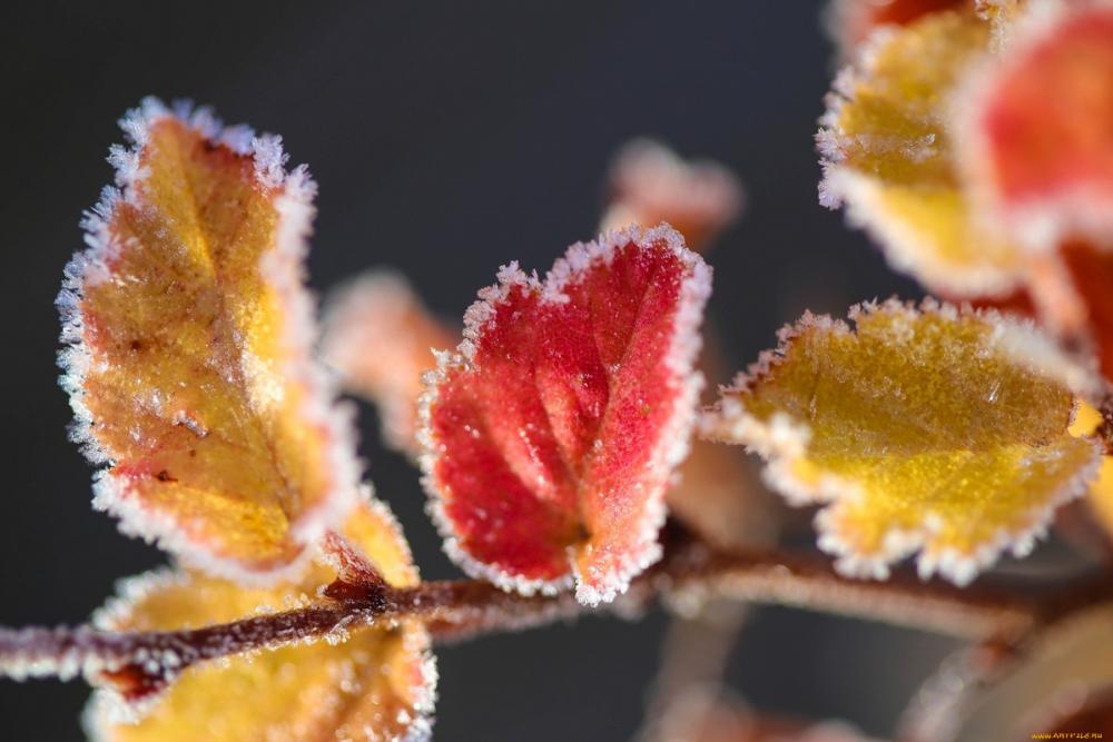 Надолго ли Камышин посетили морозы