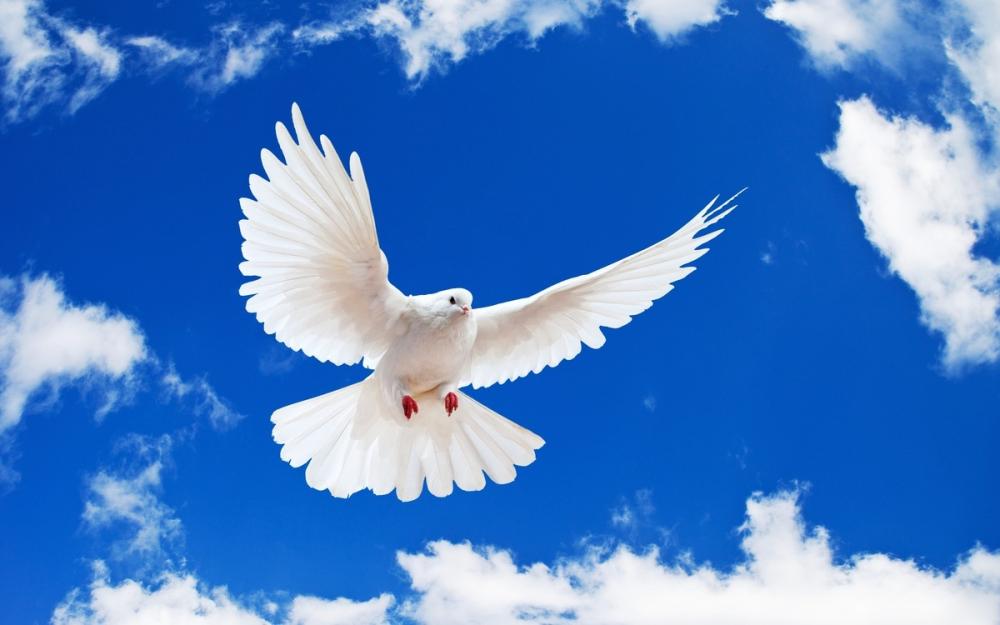 Местный сюжет «любовь и голуби» закончился уголовным делом