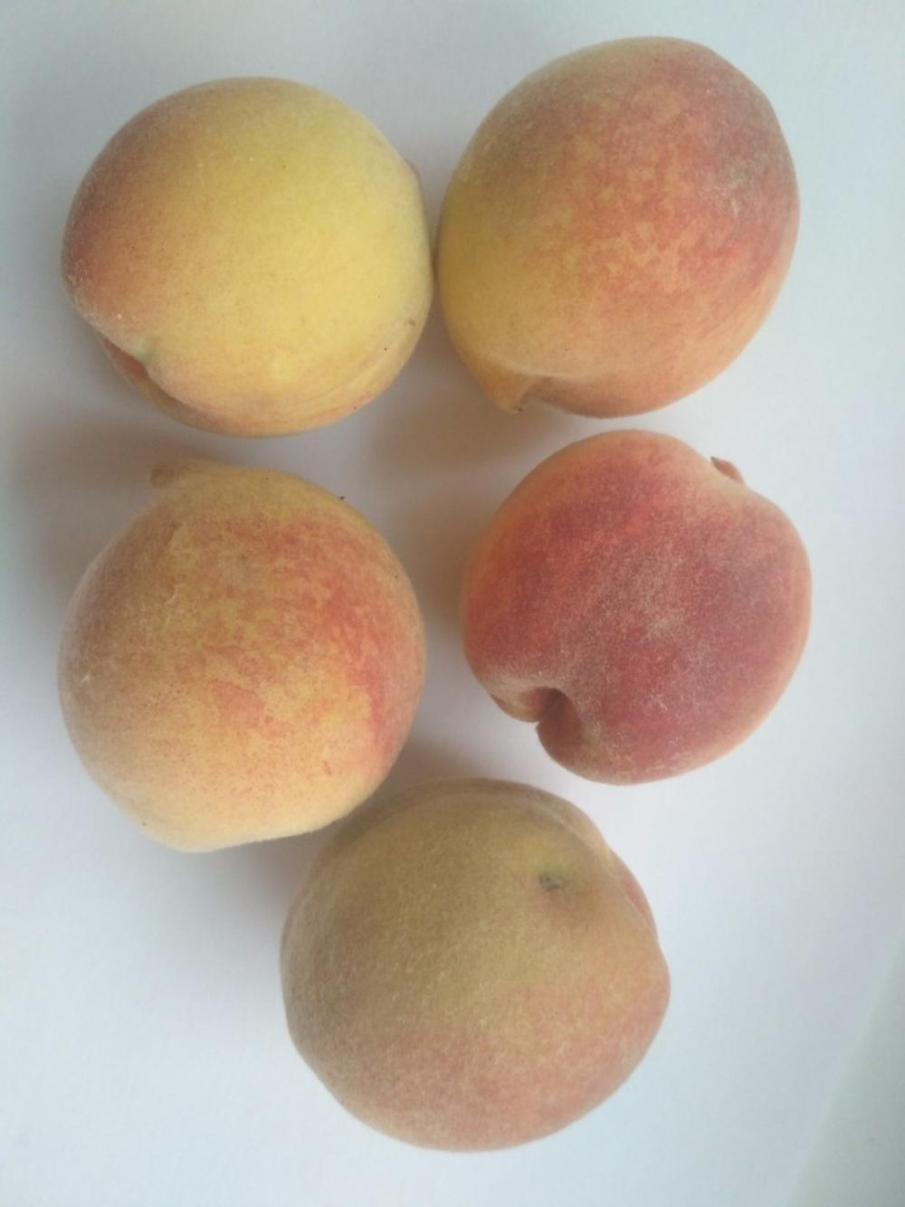 На камышинских рынках появились местные персики
