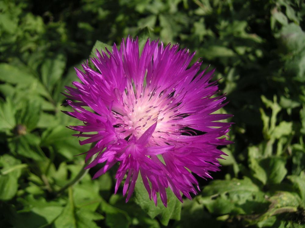 Сегодняшний летний день в Камышине будет освежать северо-восточный ветерок