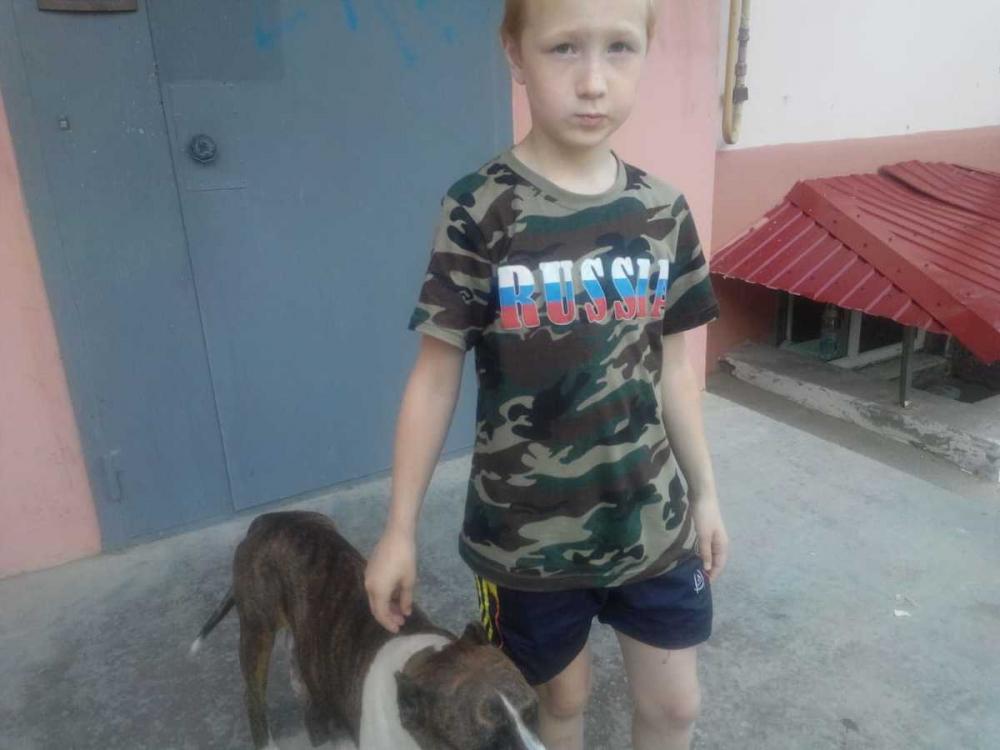 В Камышине истекающая молоком собака  со слезами на глазах ищет украденных суточных щенков