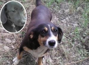 В Камышине продолжается процессуальная проверка по факту жестокого обращения с животными