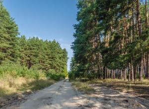 Озверевший негодяй жестоко изнасиловал и ограбил «попутчицу» в лесу