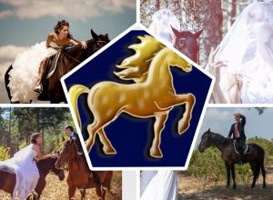 Свадебная фотосессия с лошадьми в Камышине с  Golden Horse