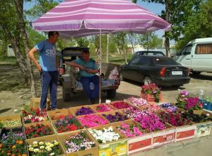 В Камышине открылись цветочные базары