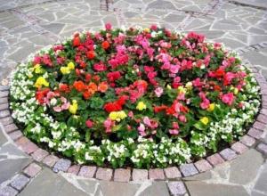 В Камышине объявили конкурс на самые красивые дома и цветники