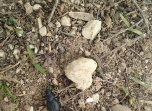 Камышане устроили фотосессию жуку, вернувшемуся из «кругосветки»
