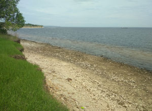 В Волге и Камышинке у нашего города сегодня зафиксирован беспрецедентный спад уровня воды