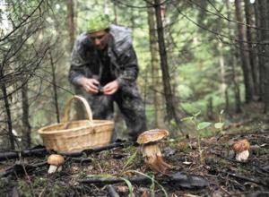 В Камышине дед и внук отравились грибами