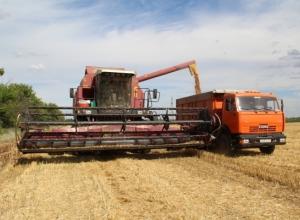 В хозяйствах Камышинского района началась уборка, средняя урожайность - всего 12 центнеров с гектара