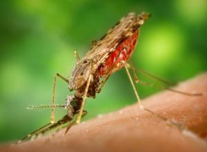 Волгоградец заболел лихорадкой Западного Нила после укуса комара