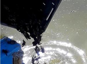 На реке Еруслан крупно повезло ракам: их выпустили из браконьерских раколовок на свободу