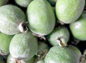 На камышинских рынках появилась полезная йодная «бомба» — фейхоа
