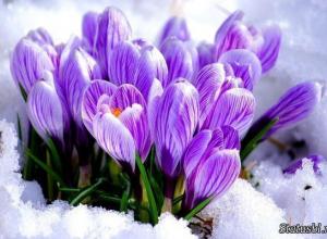 Весна в Камышине начнется с 20-градусных морозов