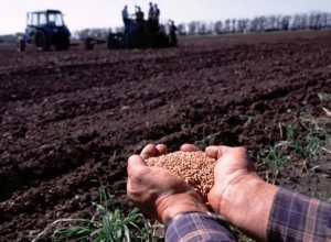 В Камышинском районе посеяли 5000 гектар озимых