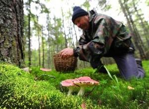 В регионе в этом году 15 человек отравились грибами