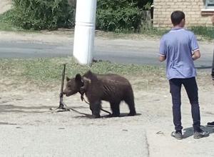 Издевательства над беззащитным цирковым медвежонком в Михайловке Волгоградской области попали на видео