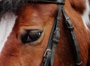 Под Котово в Волгоградской области за что-то расстреляли молодого рыжего коня