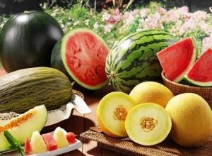 Рекомендации при покупке бахчевых для жителей Камышина