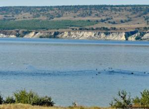 В Камышинском районе у Бутковки на Волге всплыло тело пропавшего еще летом рыбака