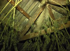 Житель Камышинского района хранил марихуану на чердаке