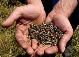 Аграрии Камышинского района убрали 28 000 га зерновых культур
