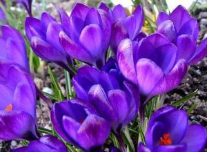 Завтра в Камышин приходит весна: днем она будет появляться, а ночью исчезать