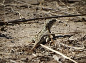 Активистам общественного движения «Новое поколение» около Уракова бугра в Камышинском районе попала в кадр симпатичная рептилия