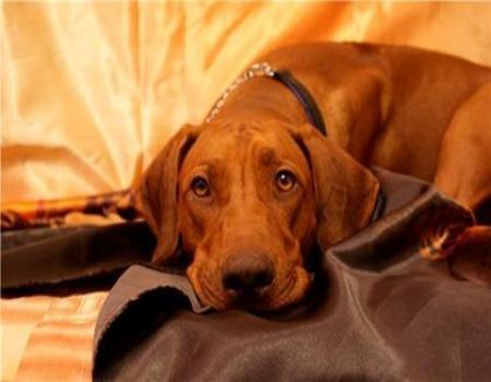 Бессердечный камышанин сбил собаку и равнодушно оставил ее умирать на дороге