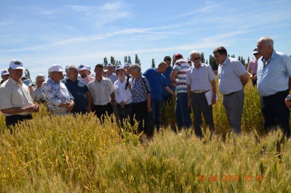 Аграрии собрались на семинар в полях Камышинского района, чтобы обсудить, на какую пшеницу делать ставки