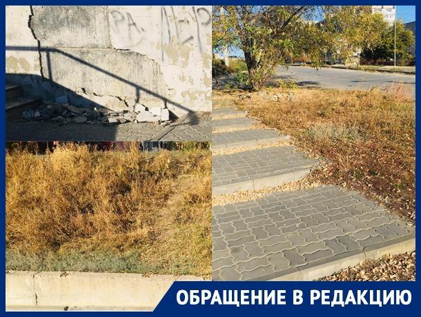 «Нескошенная трава, раскиданные листья»: камышане просят  убрать мусор в городе
