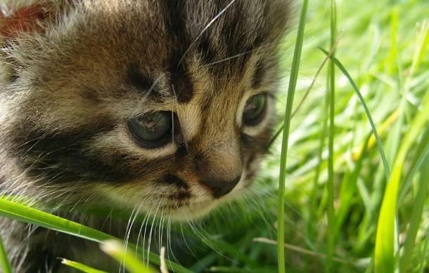 Расчленение котенка в Михайловке сняли на видео и выложили в сеть, - «Блокнот Волгограда»