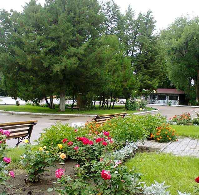 Центральный городской парк Камышина решил прикупить себе лебединое озеро