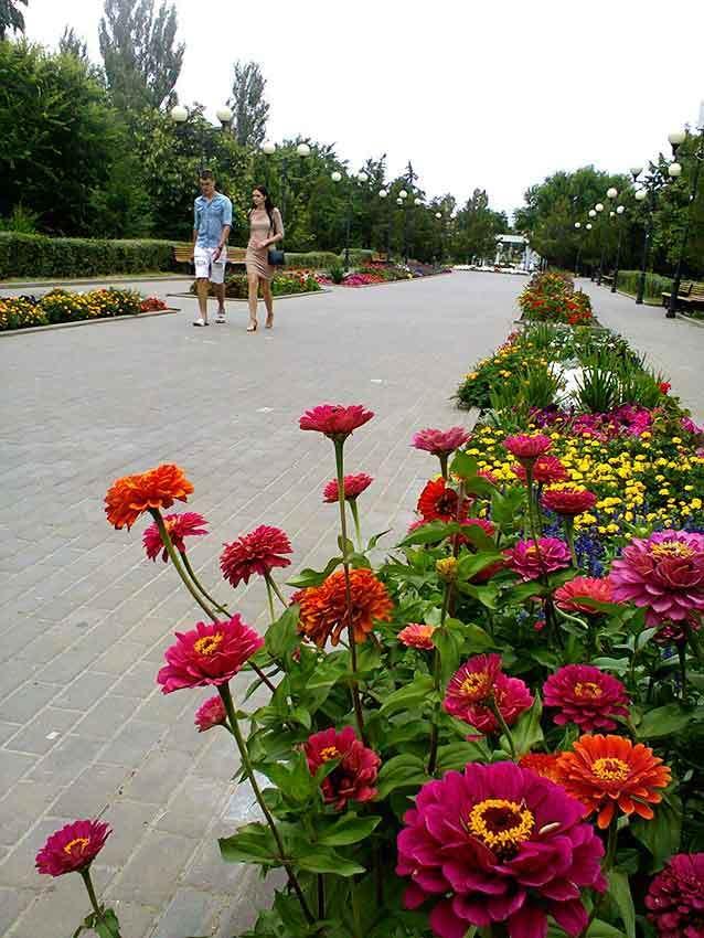 В центральном городском парке Камышина цветы вздохнули «навстречу» дождям