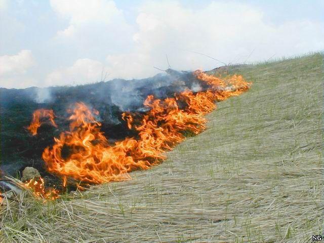 Пожарные Камышина приняли за сутки 15 звонков о ландшафтных возгораниях