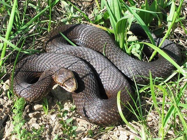 Огромная неизвестная змея напугала городских дачников под Липовкой в Камышинском районе