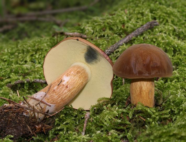 ВВолгограде 8-летняя девочка скончалась из-за отравления грибами