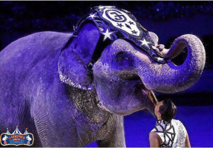 Гастроли самого большого цирка России пройдут с 17 по 19 мая на территории бухты в Камышине