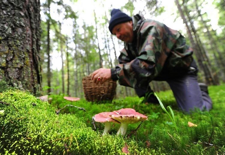 ВВолгоградской области уже как минимум 15 человек отравились грибами