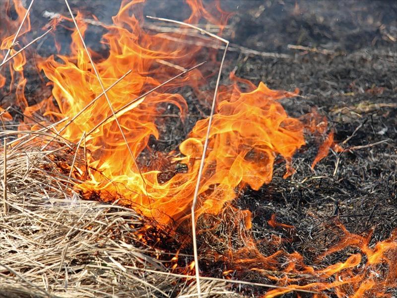 В Камышине степной пожар спалил часть кладбища