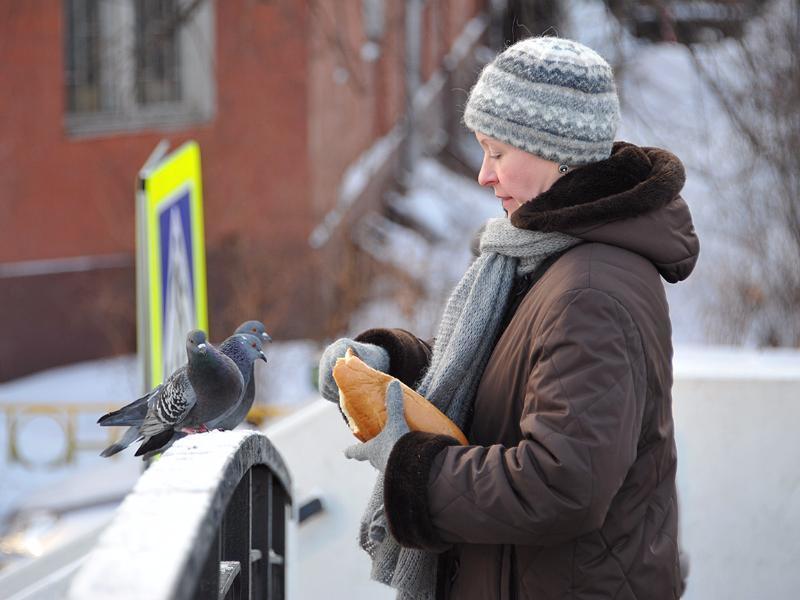 Жителей региона призывают подкармливать птиц зимой