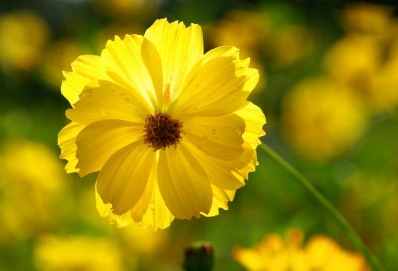 В День России в Камышине будет солнечная, комфортная погода