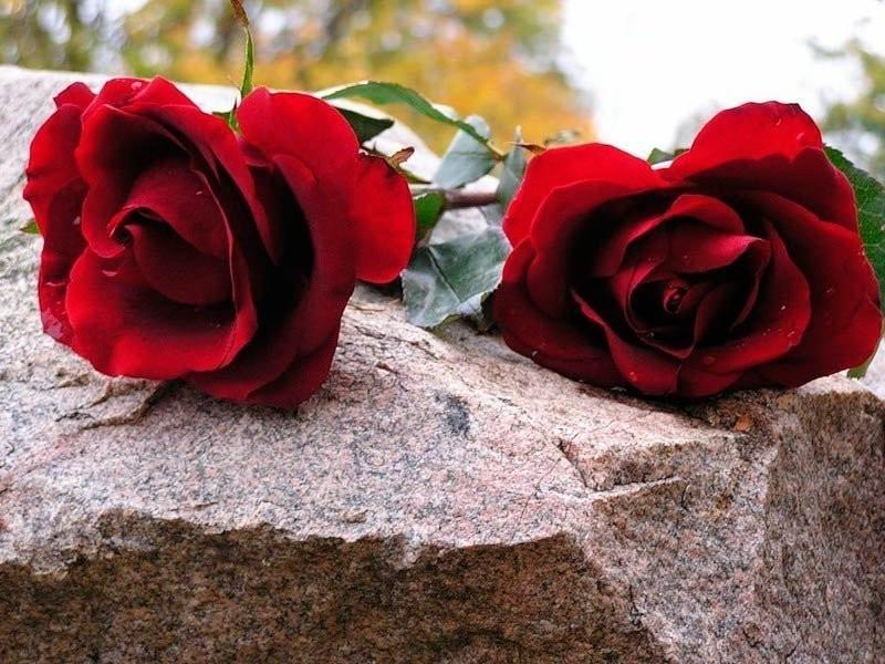 Камышинская административная газета «Диалог» сообщила, что в ожидании нового погоста  покойников хоронят на дорогах  кладбища