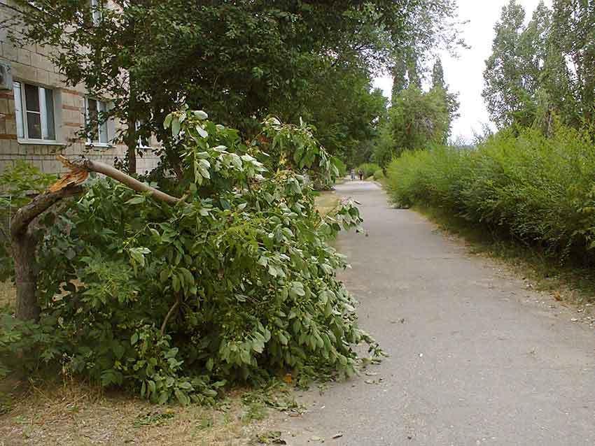 Камышане взывают к экологам в связи со «смертью» в самом центре города красивого деревца яблони-ранетки