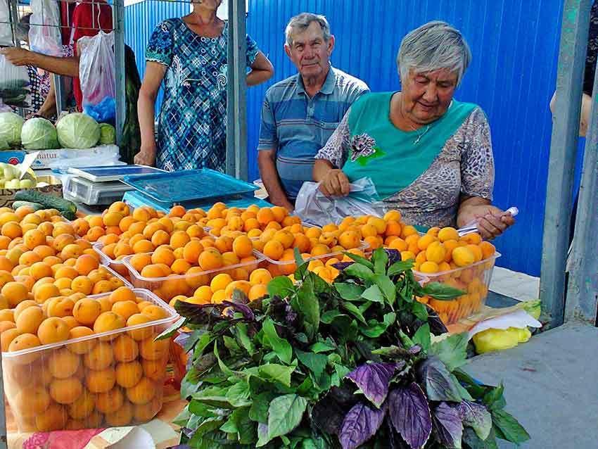 Камышин накрыл абрикосовый рай