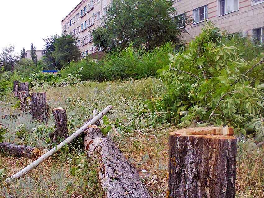 Камышан ужасает «лесоповал» под реконструкцию улицы Терешковой